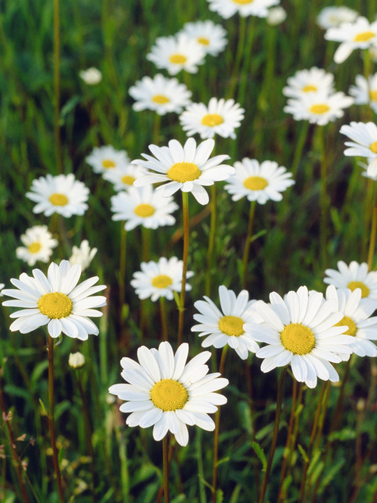 Best Funeral Flowers Near Me Brampton West Ca Flower Delivery Ontario